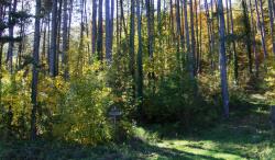bosco-pietralunga